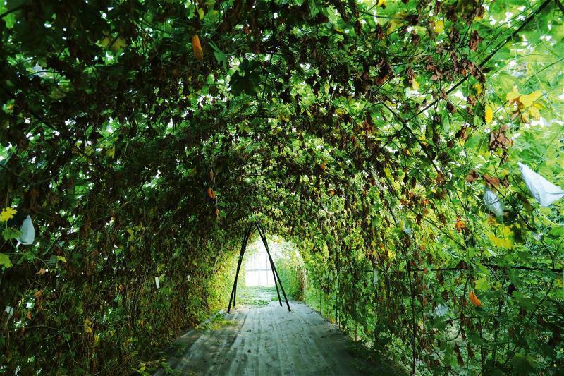 花蓮農改場的採種圃內,有幾十種從全球蒐集來的苦瓜品種。