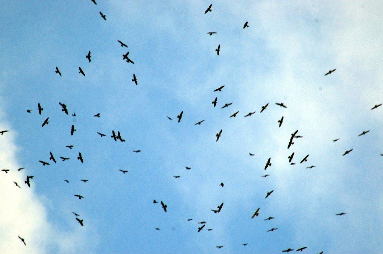 恆春半島秋冬適合賞鷹,在社頂自然公園可看見群鷹盤旋壯觀景象。圖/屏東縣政府提供