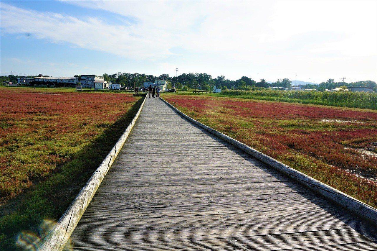 九月時節初初染上艷色的珊瑚草群生地 圖/背包客棧