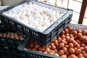 菜市場的法律學:蛋蛋的哀傷