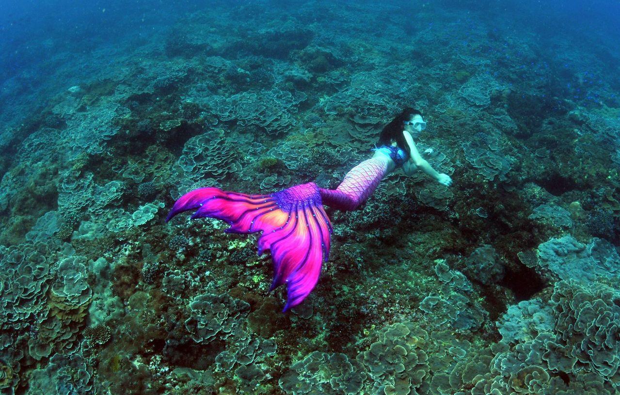 王銘祥在深澳電廠卸煤碼頭預定地,發現美麗的「玫瑰花園」珊瑚群。圖/王銘祥提供