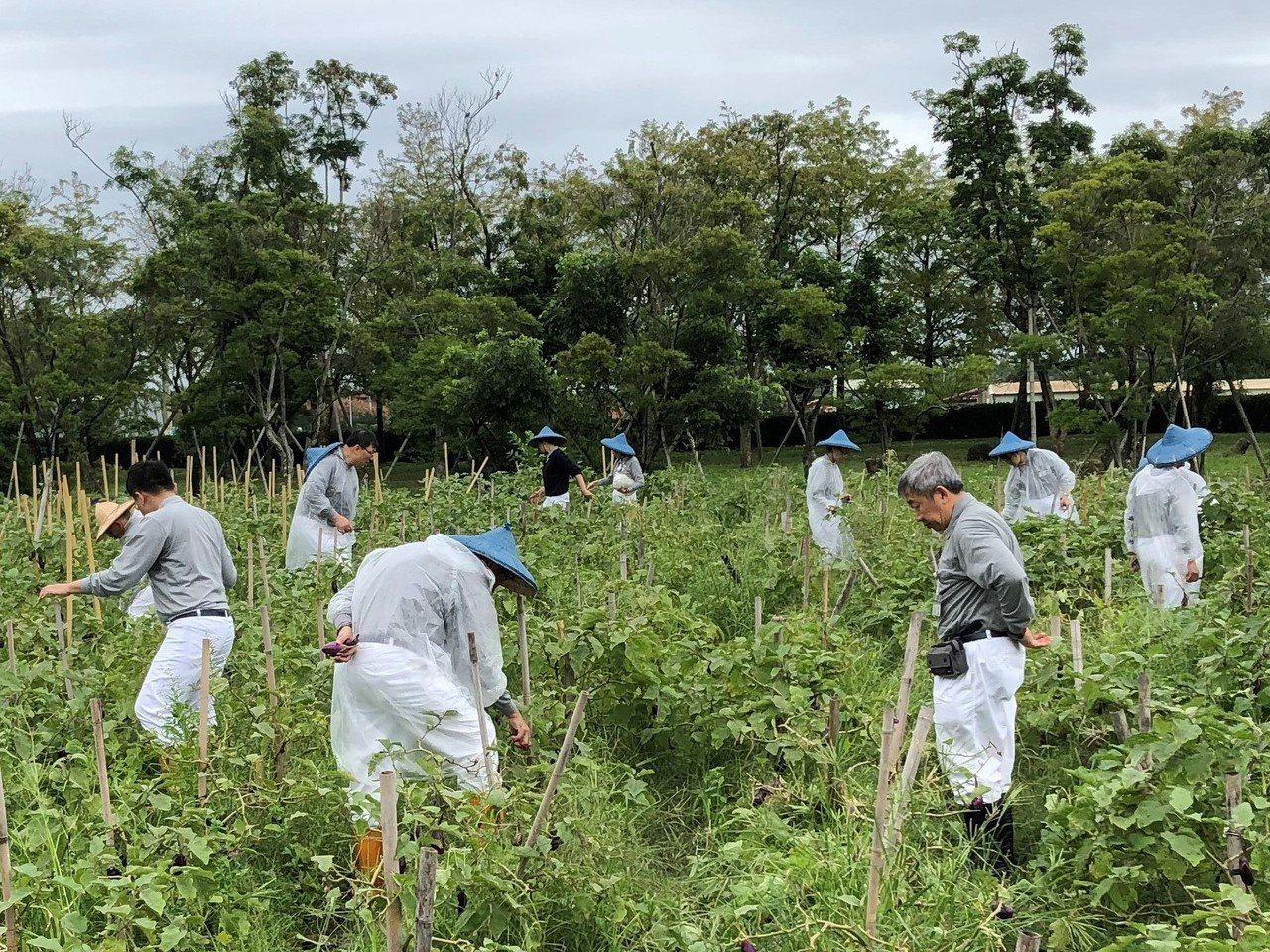 數百位慈濟職員體驗靜思精舍法師「自力耕生」的農禪生活。圖/慈濟基金會提供