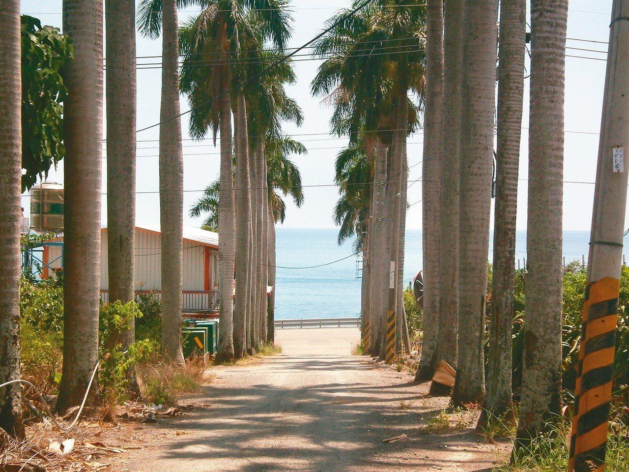 華源國小前方有100公尺的椰林大道,還有美麗的華源海灣海景。 記者尤聰光/攝影