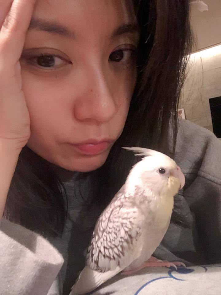 賈靜雯透露家中小鳥突然過世。圖/摘自臉書