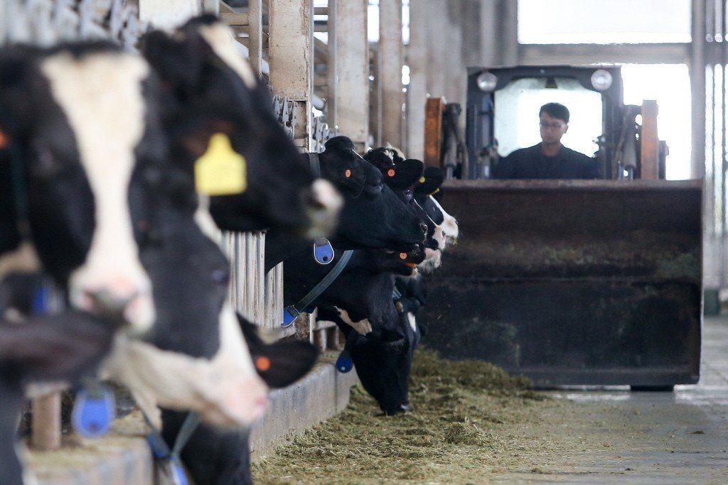 在未來農業科別的職業教育中,有望翻轉將動物視為營利的目的,重新注入人道之精神。 圖/聯合報系資料照