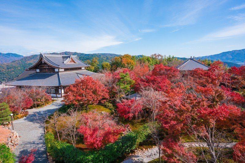 將軍塚青龍殿位處高地,能將京都市區盡收眼底。圖/樂天旅遊提供