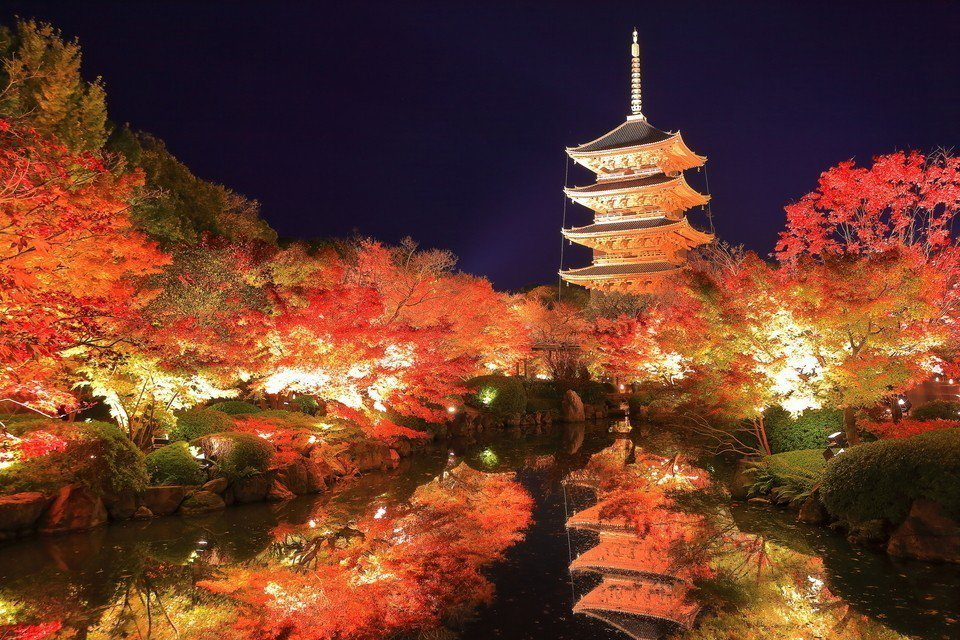 京都市南區東寺於楓葉季的夜間點燈。圖/樂天旅遊提供