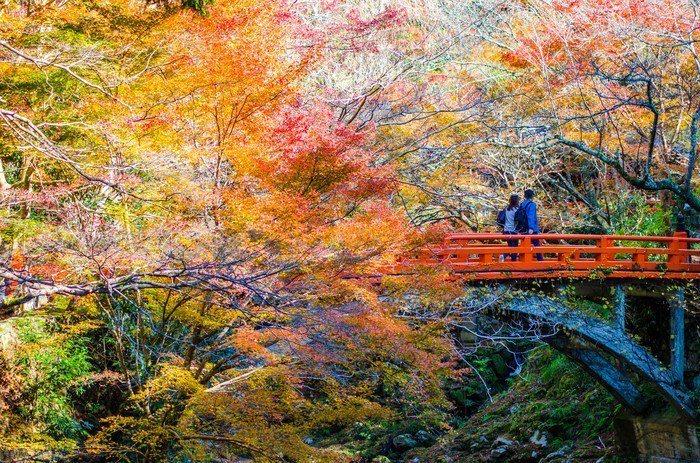 高尾山紅葉季。圖/樂天旅遊提供