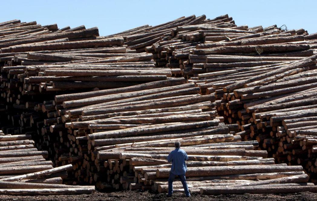 加拿大以退出談判要脅,終於獲得華府同意續留如同「加國軟木材護身符」的19章。這不...
