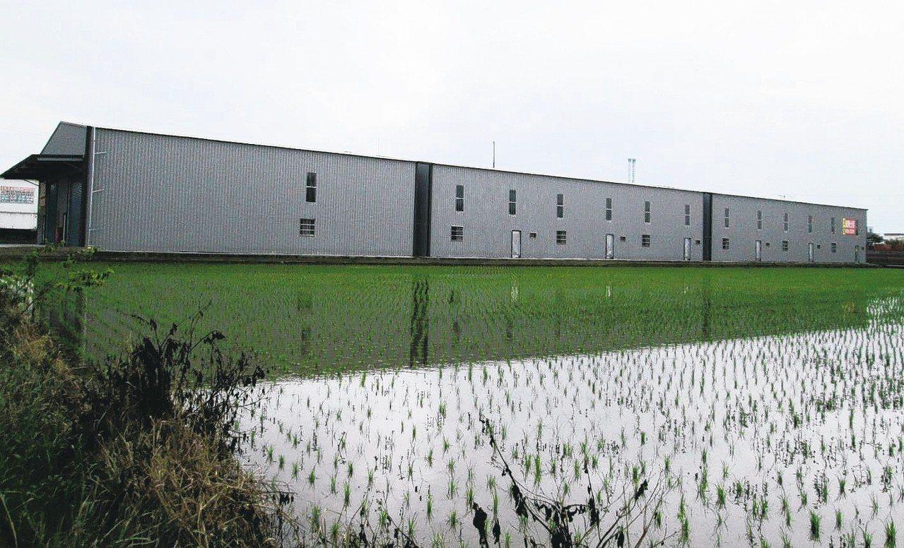 桃園縣內隨處可見這種蓋在農田裡的農地工廠。 圖/聯合報系資料照片