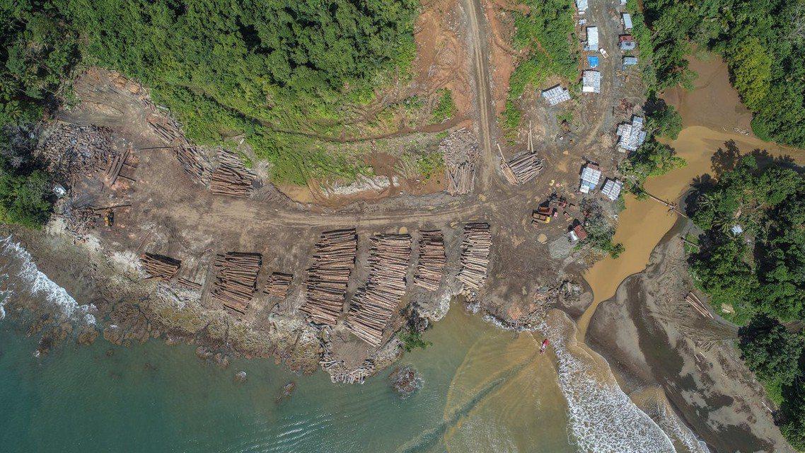 環保組織「全球見證」呼籲中國應強制規範有關單位及林木進口商,盡責把關原木、木材是...