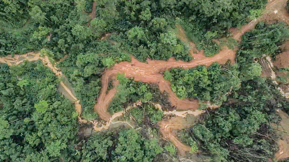 光是為了用來輸送木材、砍伐開闢的運輸道路(logging road),其總長度就...