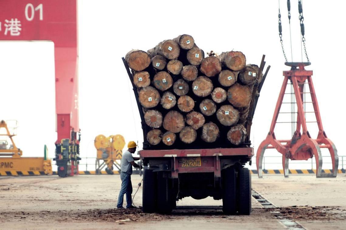 全世界最大的林木進口國與消費國——中國——縱容非法進口、對熱帶原木索求無度? 圖...