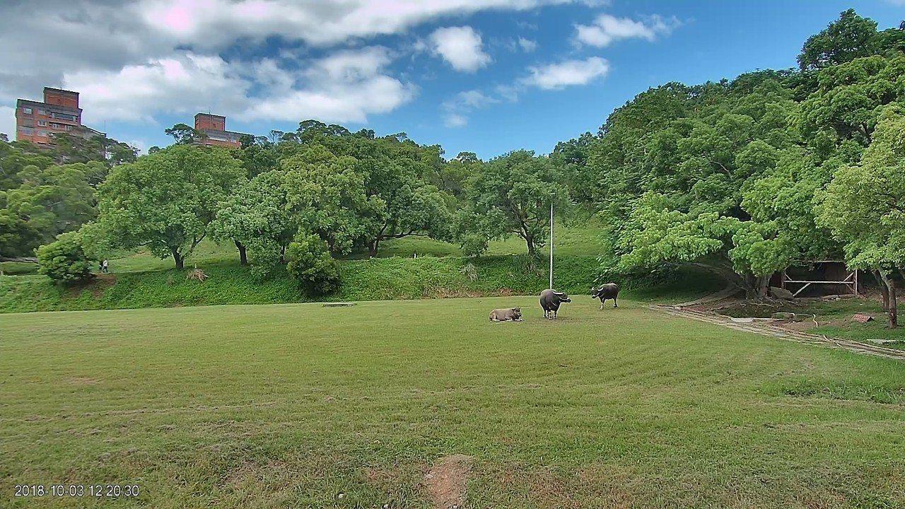 台北藝術大學推出的「牛奔電視台」,24小時直播北藝大鷺鷥草原的生態與景觀變化,而...