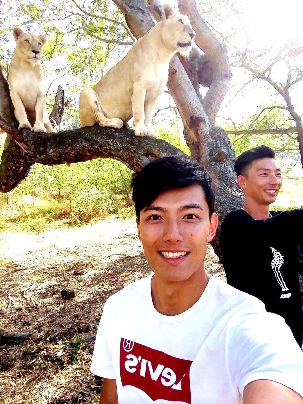 賴東賢和賴俊龍忙著跟獅子自拍。圖/三立提供