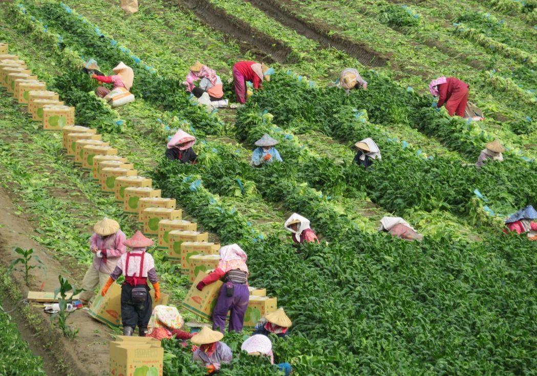 勞保局今日公告「農民實際從事農業工作而致傷害審查準則」。圖/本報資料照片