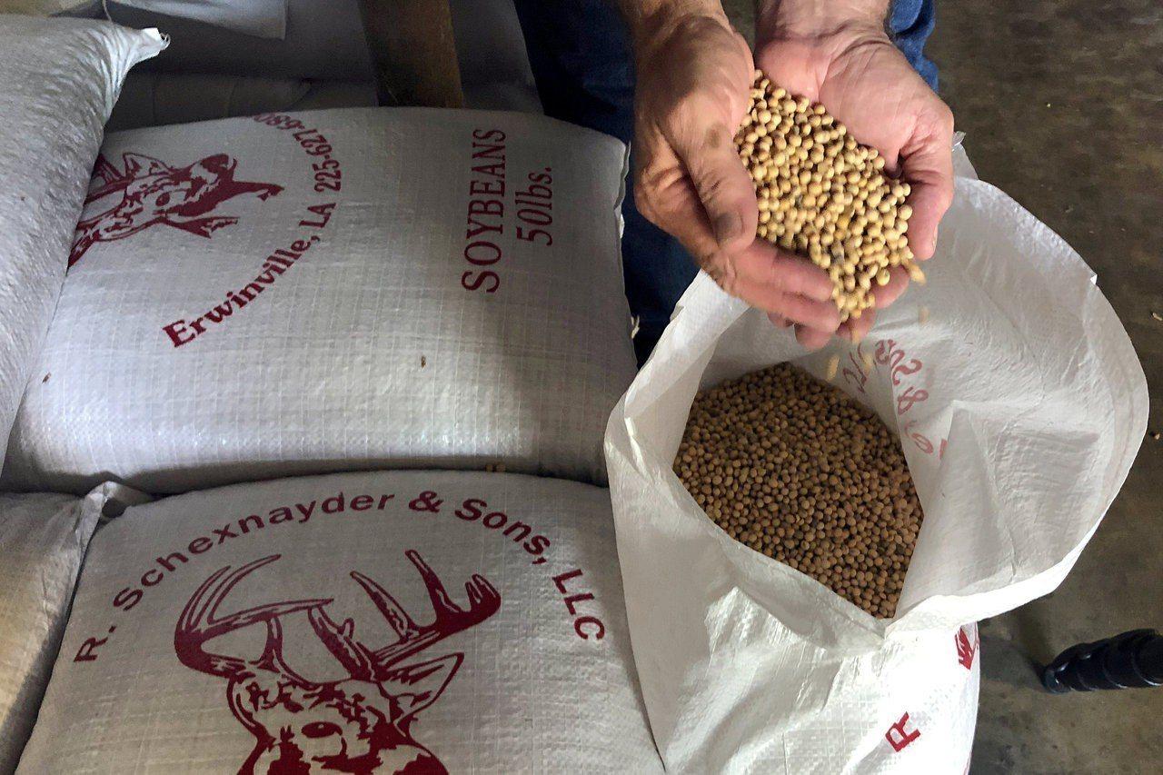 東南亞國家近月來進口美國黃豆數量激增,市場人士懷疑中國買主透過東南亞國家買進美國...