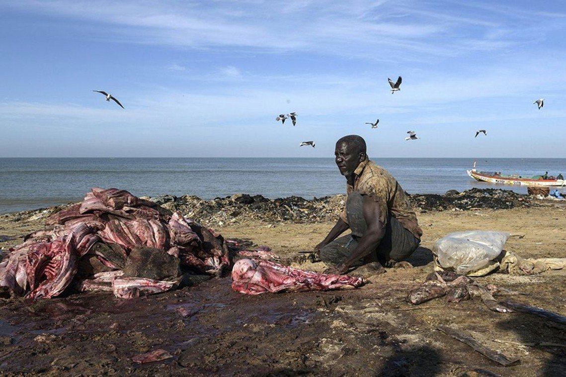 西非海域已成為漁夫的死亡之海?國際環保團體「綠色和平」警告,仰賴漁業的西非國家塞...