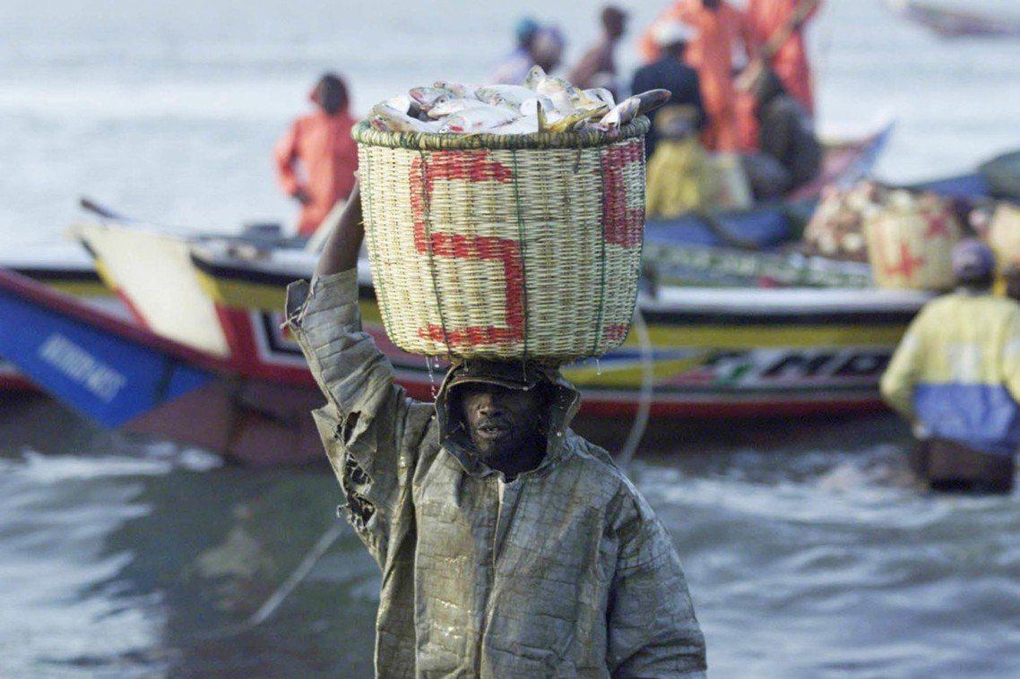 漁業是塞內加爾的經濟命脈,國內有將近20%的勞動力從事漁業相關行業,主要出口品也...