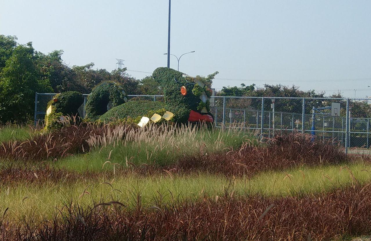 台中市議員吳瓊華與地居民反映,烏日區自治公園小花海內深褐色的狼尾草可能會割傷人,...