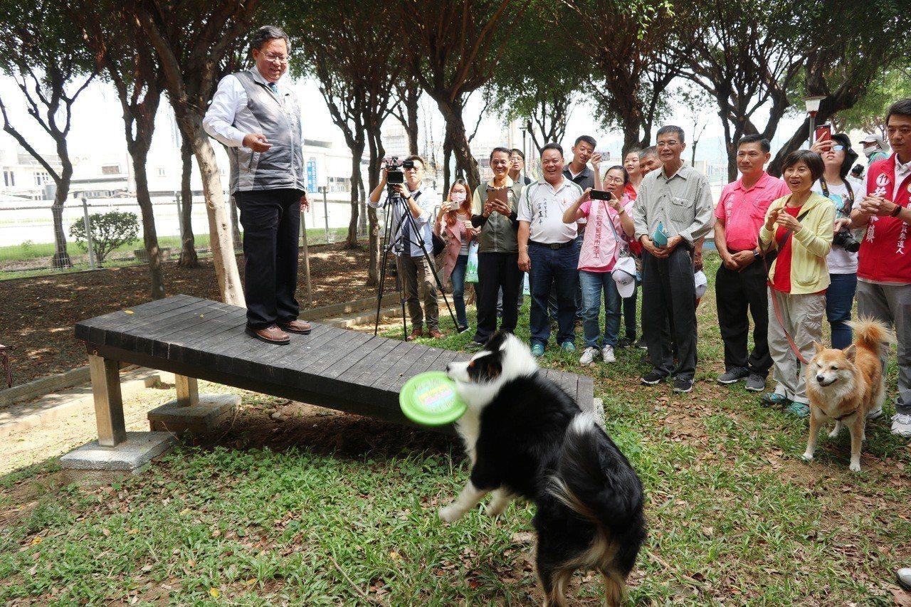 桃園市寵物友善專區聯合啟用典禮今上午舉行,市長鄭文燦和「乖乖」邊境牧羊犬玩飛盤遊...