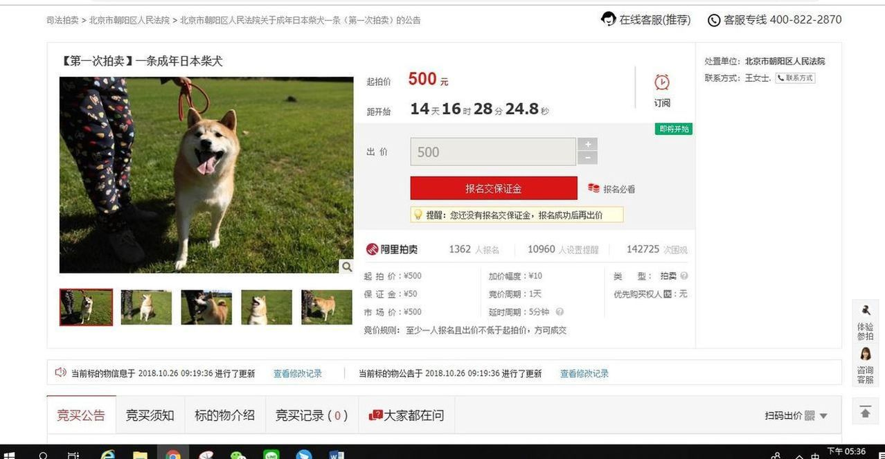 登錄拍賣網站頁面,可看到拍賣將於11月10日上午10時開始,柴犬的起拍身價為50...