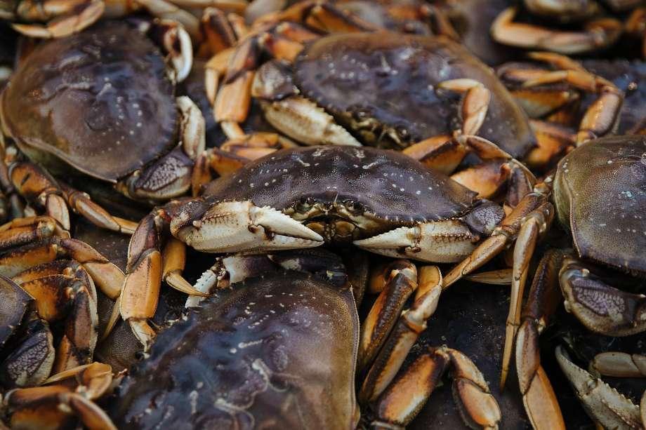 州漁獵局說,今年的蟹季又要延後,因為今年的鄧金斯蟹,再次驗出含有超標的海藻酸。 ...