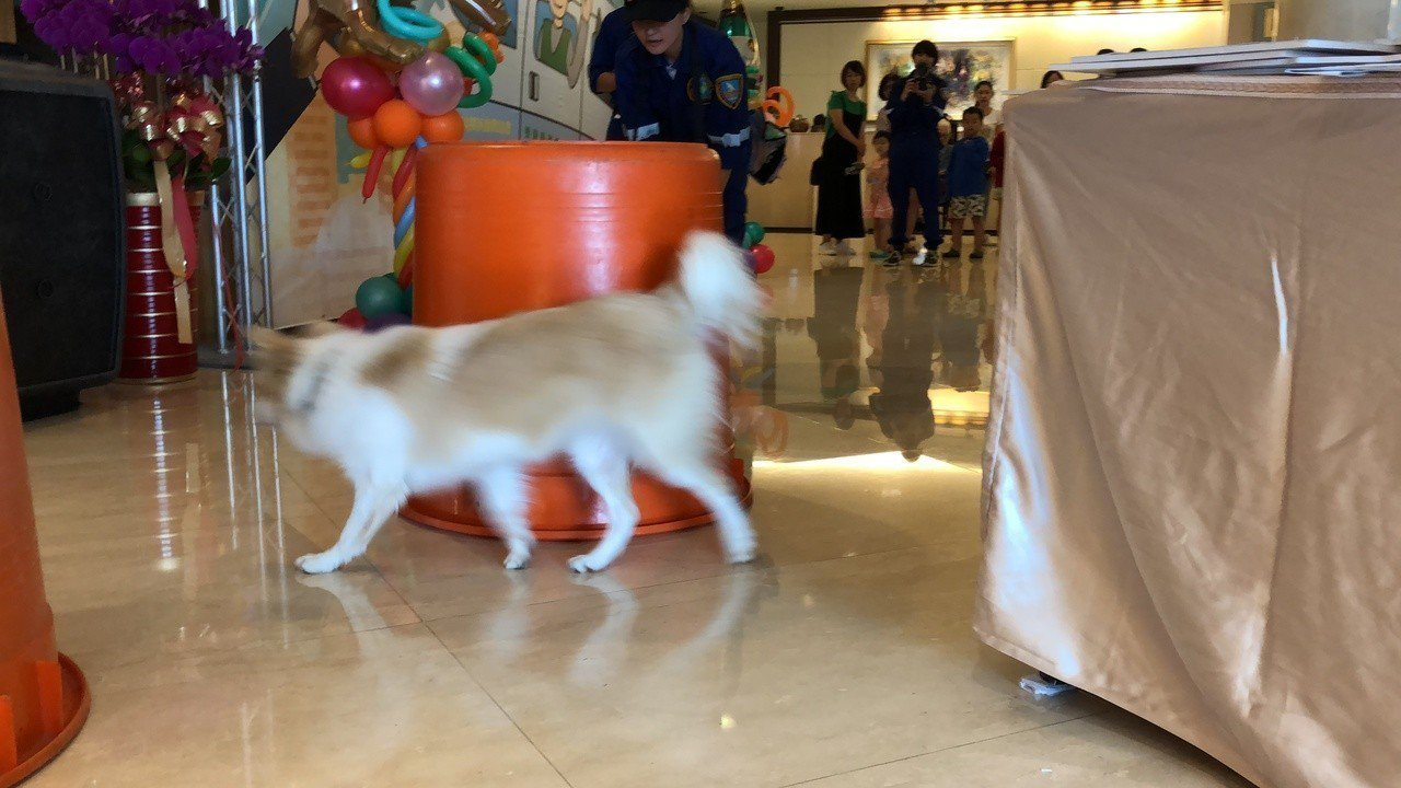 「Emma Good!」搜救犬迅速的找到受困民眾,贏得現場民眾熱烈掌聲。記者邵心...