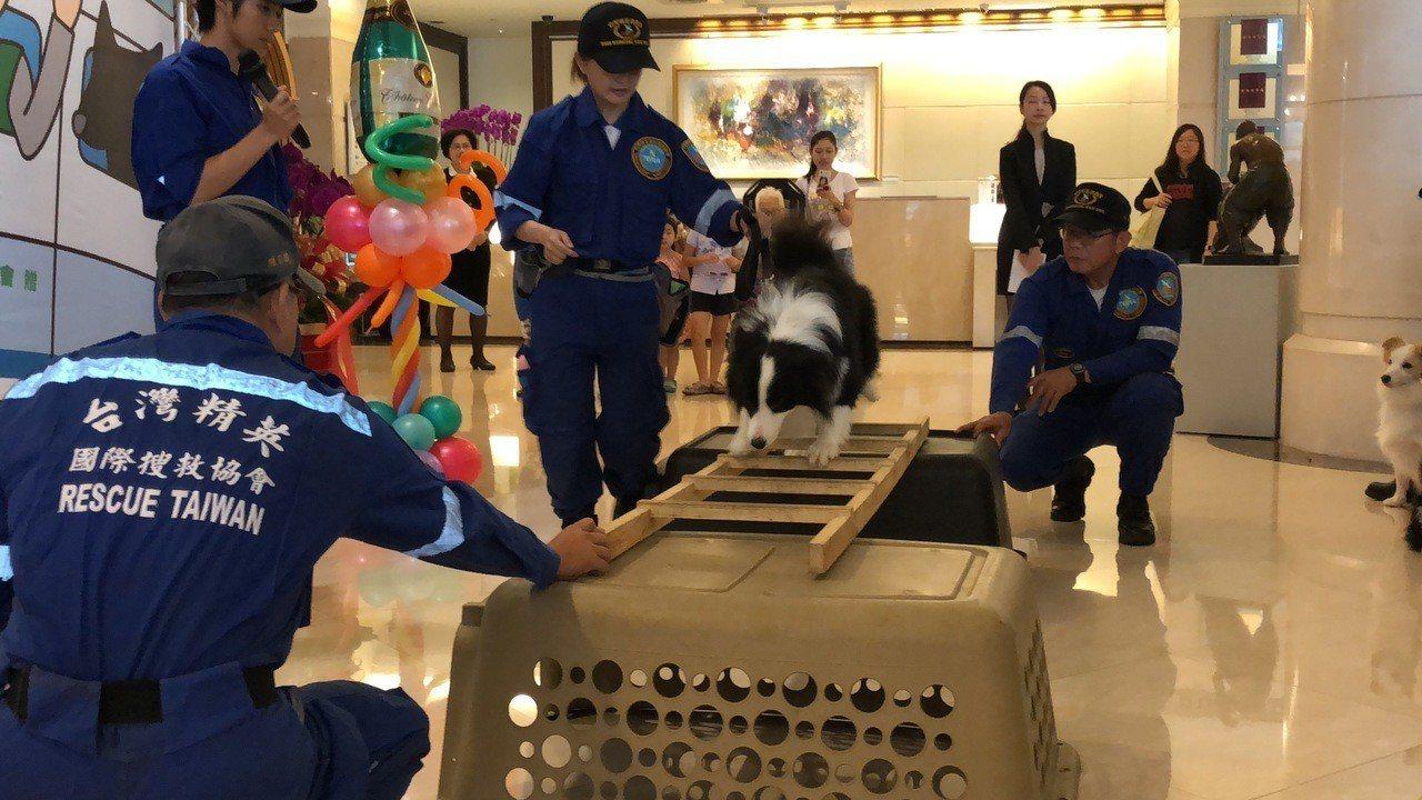 搜救隊示範搜救犬訓練科目,只見搜救犬按照領犬員指令,敏捷地穿越障礙。記者邵心杰/...