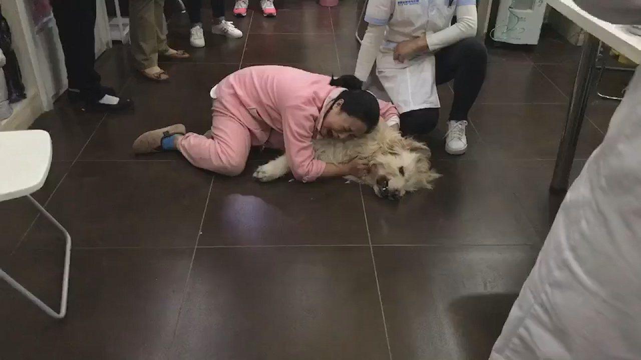 中國大陸女子張莉紋在臉書控訴被她從小養到大的愛犬朱莉疑似被鄰居用藏有毒鼠藥的雞肉...