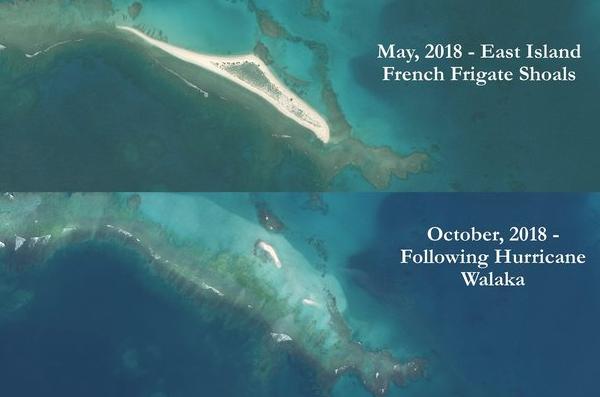 夏威夷的東島在瓦拉卡颶風過境後遭到完全抹去,使得瀕臨絕種的夏威夷綠蠵龜與僧海豹失...