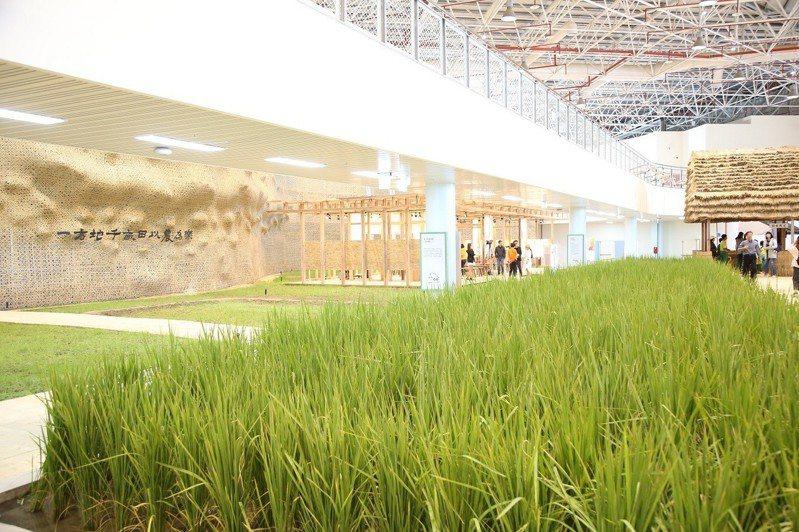 樂農館打破以往展覽隔間和框架,全區覆土讓農作物可以在館內生長。圖/台中市政府提供