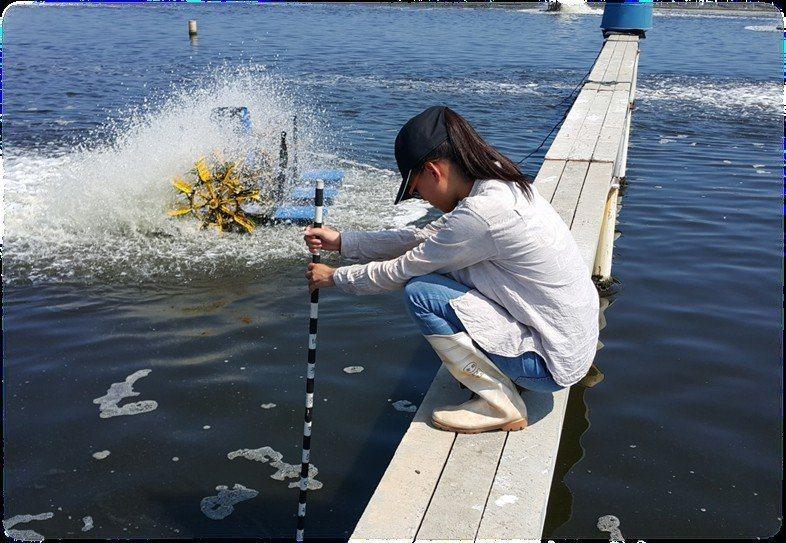 目前高職男女修讀水產科比率差距懸殊,教育部在新課綱中增列性平文字,鼓勵女學生選習水產群科。圖為屏科大學生到汶萊實習養蝦經驗。圖/報系資料照
