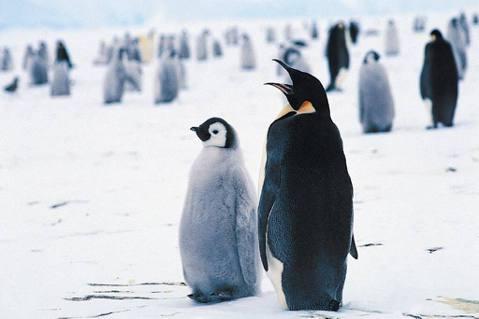 近年來到南極的遊客增多,池田宏擔心遊客會不知不覺傷害到南極的環境和動物,因此他到...