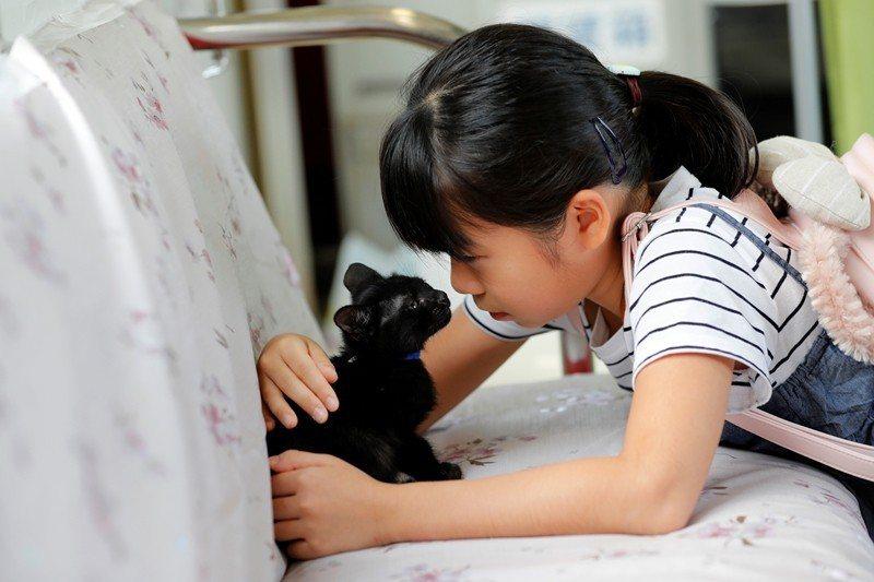 除了人類,動物「似乎」沒有語言,那麼我們如何能與非人動物溝通? 圖/路透社