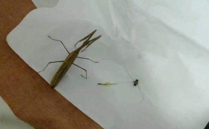 最後只見牠身首分離被放在衛生紙上。 圖片來源/《虎撲社區》