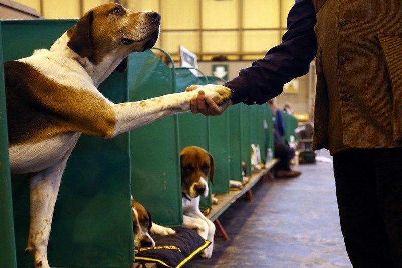 正因為人和動物溝通有難度,所以才需要人們更加用心地去理解與觀察,也需要相關知識,...