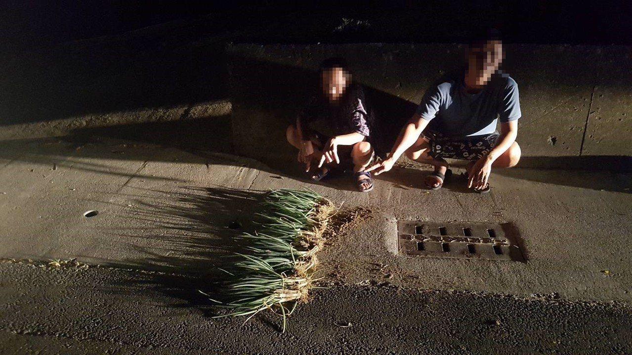蘇姓與林姓兩名竊賊深夜偷蔥,臨走前遭巡邏員警發現。記者徐白櫻/翻攝