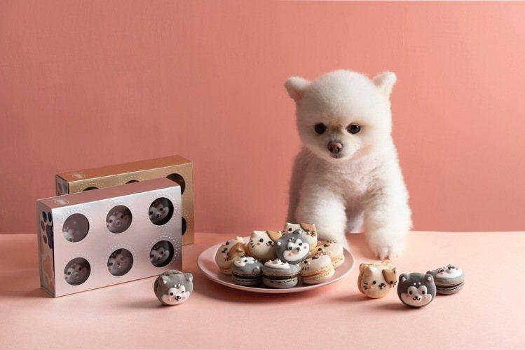 橘斑貓造型馬卡龍是覆盆子草莓。圖/Dazzling Cafe提供