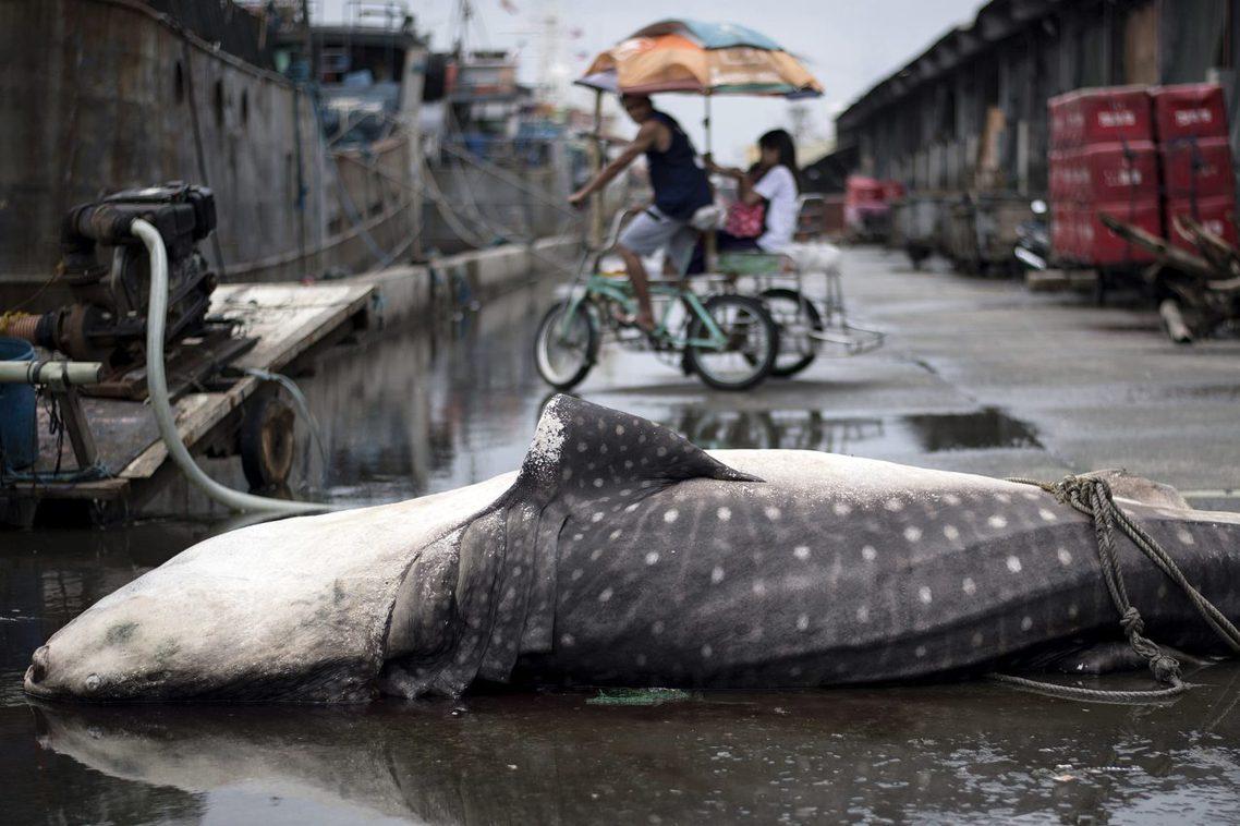 「我們正面臨拯救物種滅絕的最後時刻!」世界自然基金會(WWF)警告,人類對環境的...