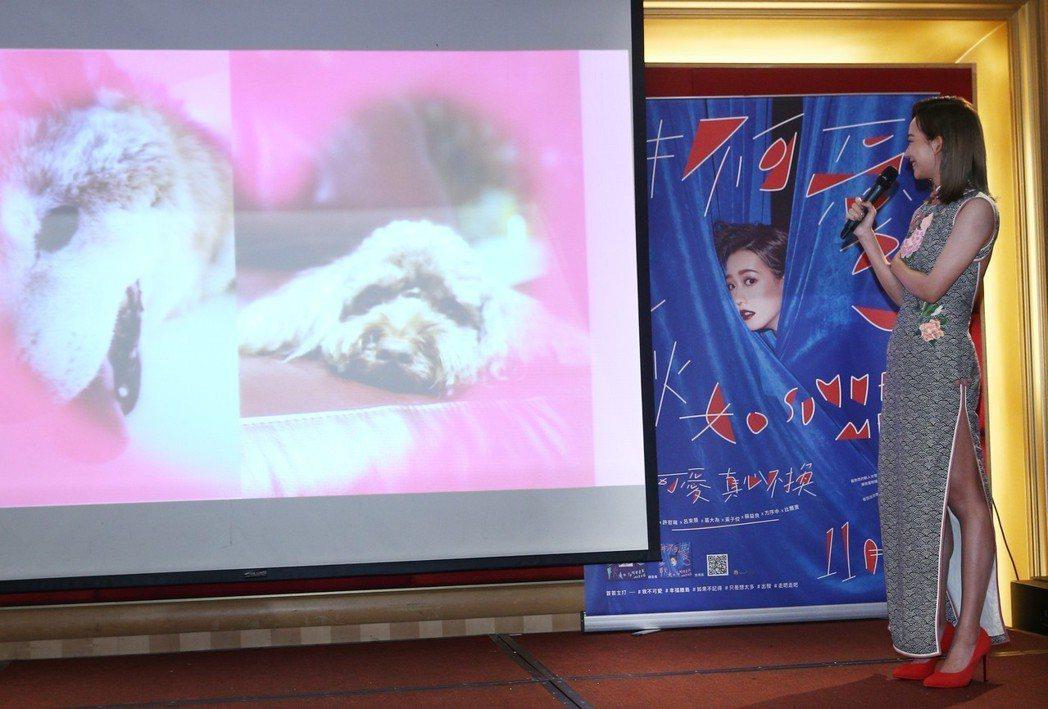 孟耿如穿著開高衩露背旗袍舉行發片記者會,看佼佼愛犬的VCR當場涙灑。記者蘇健忠/...