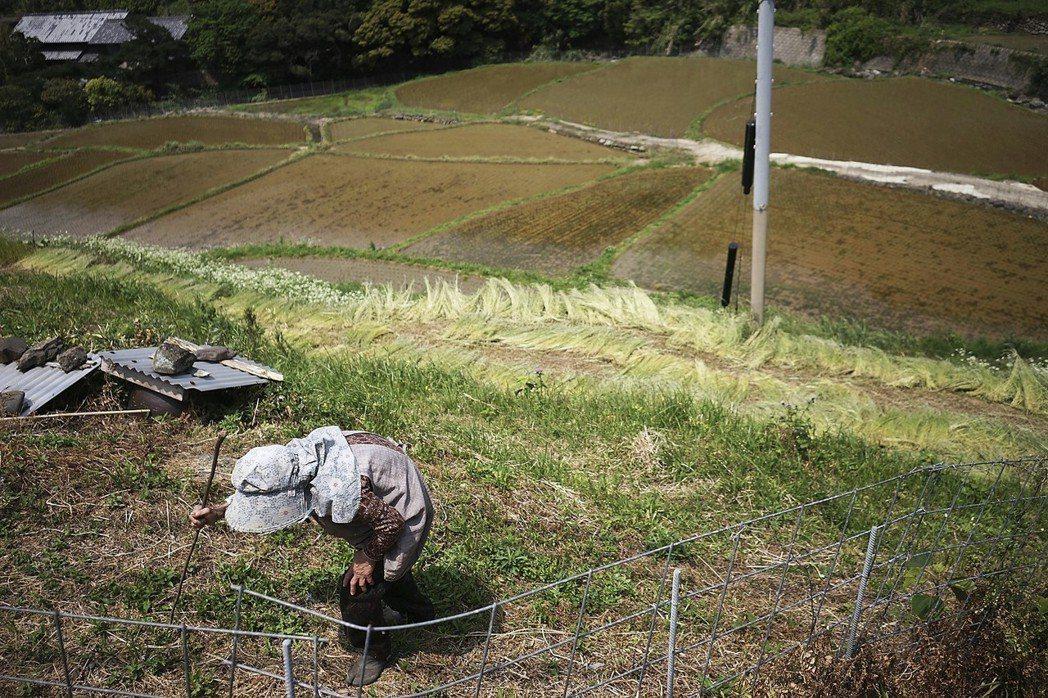伴隨著少子高齡化以及鄉村人口外流,日本農村能夠找到的幫工越來越少、也越來越老。 ...