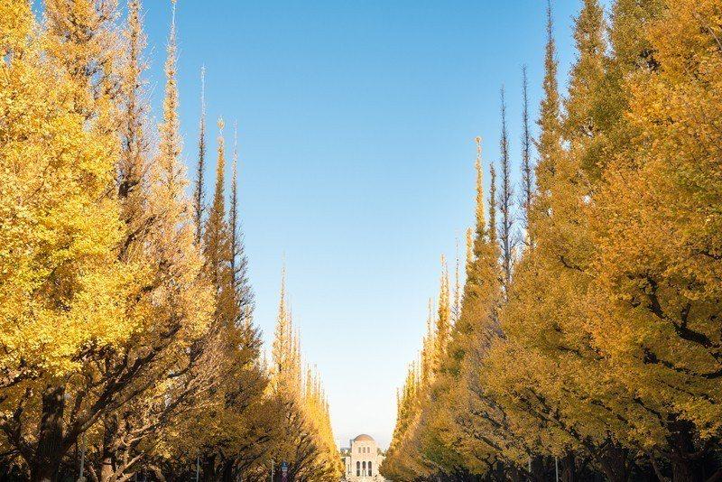 東京明治神宮外苑的銀杏大道。圖/樂天旅遊提供