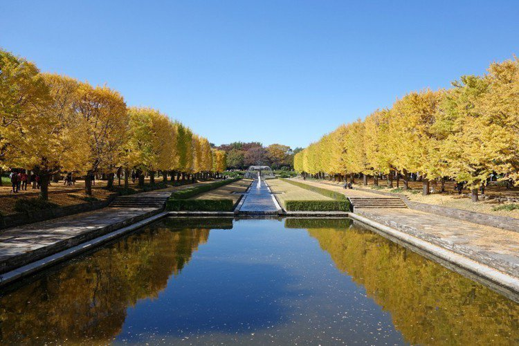 國立昭和紀念公園。圖/樂天旅遊提供