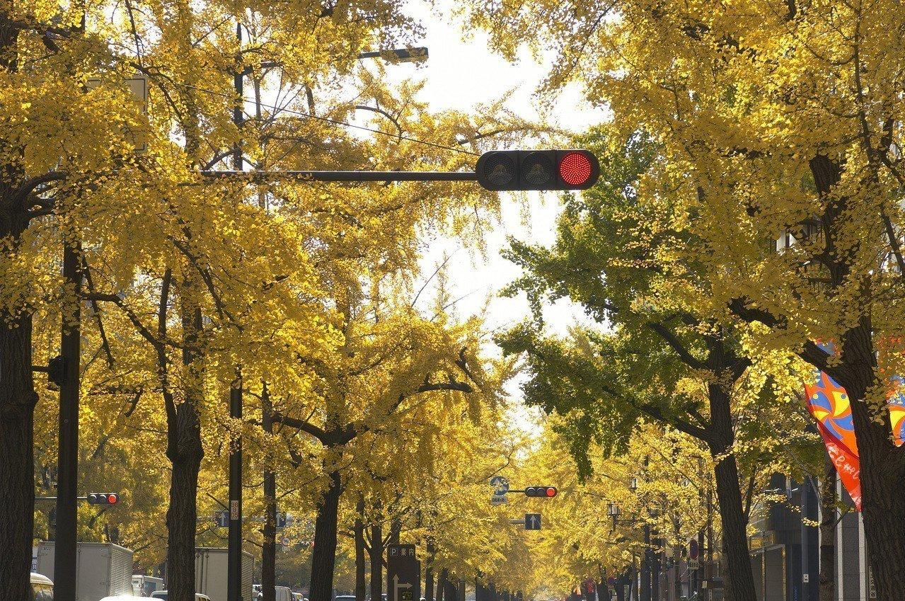 大阪市御堂筋的銀杏樹大道。圖/樂天旅遊提供