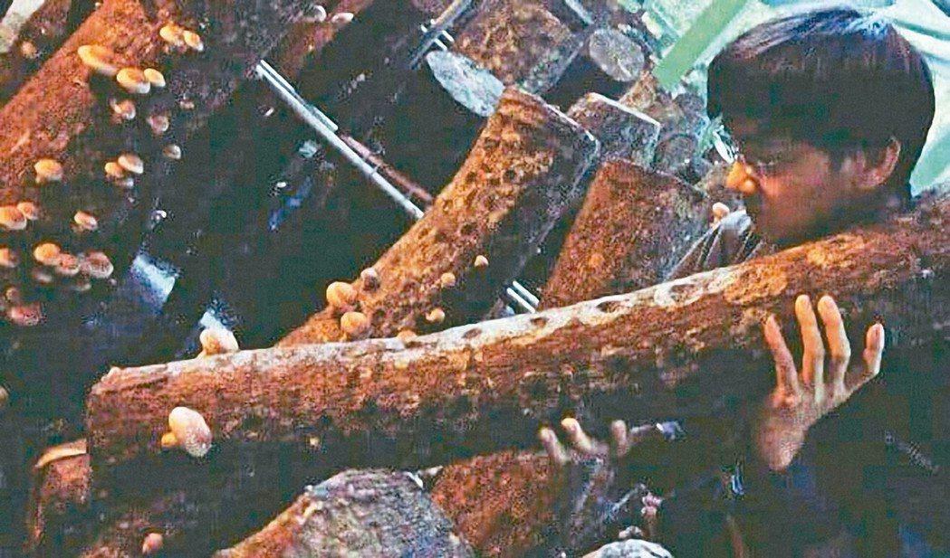 老家在石碇的葉家豪2年前回鄉打造螢火蟲公益書屋,如今再培育椴木香菇、開放認養並努...