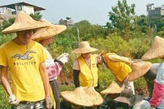 2018/這家社企 想為台灣種3千萬棵樹