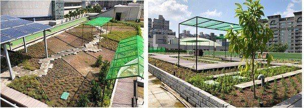 三民家商空中菜園運作現況。 高雄市工務局/提供。