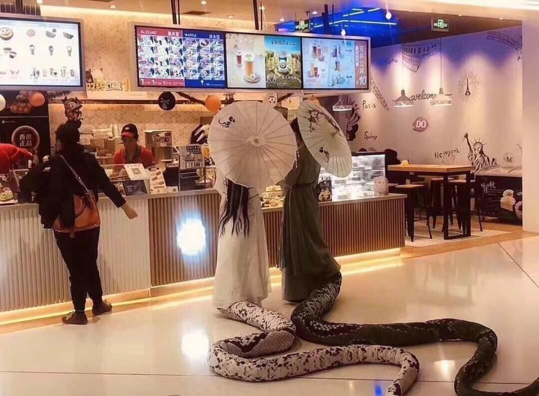 青蛇白蛇出現在商場買飲料,被網友封為今年最狂萬聖節裝扮! 圖片來源/ 天氣妞微博