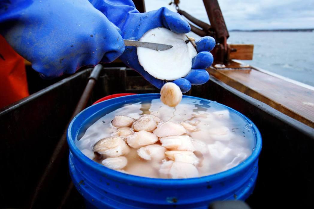 小小的扇貝引發英法漁業衝突——如同「後脫歐時代」英歐衝突的前奏。 圖/美聯社